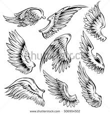 Bird Wing - wing stock images royalty free images vectors