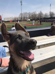 belgian sheepdog illinois claire wheatley claireee214 twitter