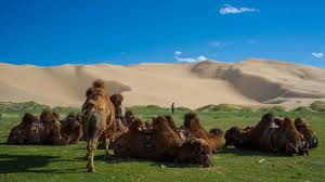 camel bells and smoky deserts harvard political review