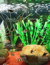 Aquarium Tropical Plants Tropical Aquarium Fish Tank Image Plastic Plants Gravel Tiger