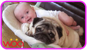 pug dog loves baby they share funny playtime moments youtube