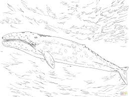 blarabi page 7 killer whale coloring pages for your childs us