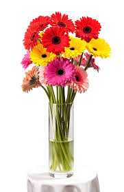 amazon com bloomsybox flowers for delivery gerbera daisies