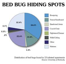 how can you get rid of bed bugs prevent bed bugs bed bugs in home how to get rid of bed bugs