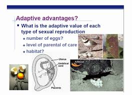 ap biology chapter 46 animal reproduction part 1 youtube