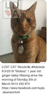 Missing Cat Meme - lost cat woodville adelaide 632018 mufasa 1 year old ginger tabby