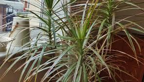 home design studio uk plant plants amazing indoor tropical plants naman spa mia design