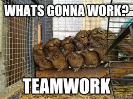 Teamwork Memes - whats gonna work teamwork helpful hamsters quickmeme