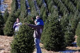 christmas tree farms asheville u0026 nc mountains