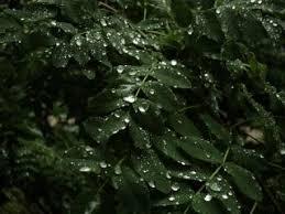foto bagnate foglie bagnate goccioline scaricare foto gratis