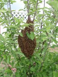 meadow sweet apiaries