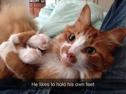 Cat Hug Meme - majestic portraits of maine coon cats that become mythical creatures
