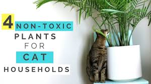 cat friendly houseplants 10 non toxic plants cool stuff for cats