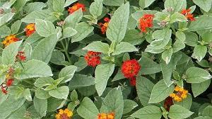 best new summer landscape plants for florida gardens