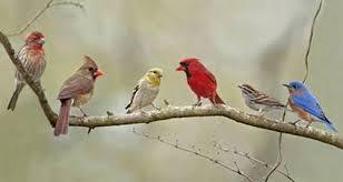Florida Backyard Birds - image gallery most common backyard bird