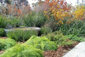 california native plant gardens native plant landscaping ideas backyard fence ideas