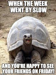 Tortoise Meme - smiling happy excited tortoise meme generator imgflip