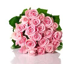 wholesale roses farm2door wholesale roses 50 stems of stemmed 50cm pink