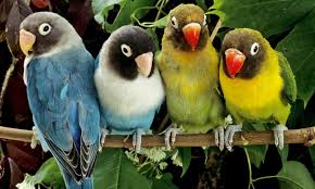 beautiful birds pics hd for kids wallpapers parot bird online