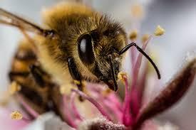 honey 10 sweet photos bees