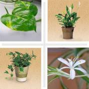 10 plants that clean the air in your home this old house