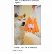 Doge Meme Tumblr - what do you think the doge dog is doing right now this picture was