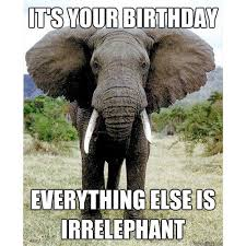 Birthday Animal Meme - 150 happy birthday memes dank memes only
