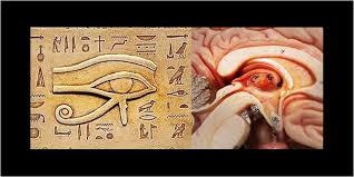 Third Eye Blind Name Meaning Cannabis U0026 The Pineal Gland Turn On Your Third Eye