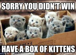 Kittens Memes - box of kittens memes quickmeme