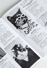cat high the yearbook 79 best cat images on cats cat