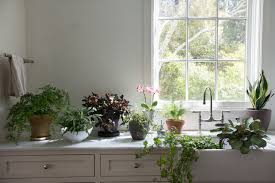 Modern Houseplants by Browse Houseplants Gardenista