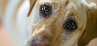 how dogs stole our hearts science aaas