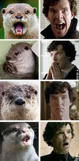 Benedict Cumberbatch Otter Meme - otters that look like benedict cumberbatch