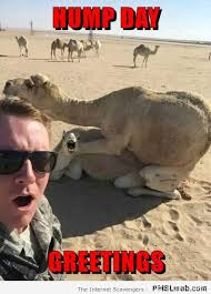 Meme Hump Day - 1 hump day greetings meme pmslweb
