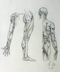 257 best anatomy for sculptors arms images on pinterest