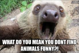 Sloth Whisper Meme - what do you mean you dont find animals funny