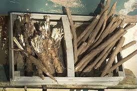comment cuisiner les salsifis comment cuisiner les salsifis et scorsonères