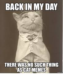 Business Cat Memes - 25 best memes about business cat meme red dot business cat