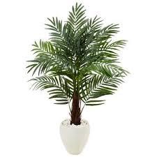 palm indoor plants you ll wayfair