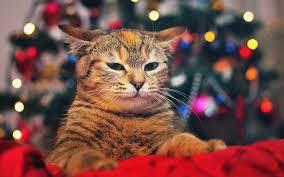 cat christmas cat christmas tree lights 6992540