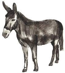 draw donkey draw step step