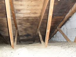 free certified visible mold inspection in kitchener