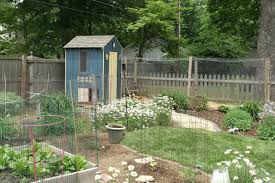 Chickens For Backyards by Kentucky Small Flocks