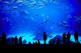 aquarium team ecco ocean center u0026 aquarium