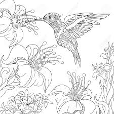 hawaii coloring pages to print hibiscus pictures imagixs flower