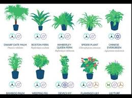 nasa reveals a list of the best air cleaning plants for your home