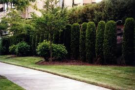 Bushes For Landscaping Pictures Of Landscaping Fascinating Landscaping Bushes Home