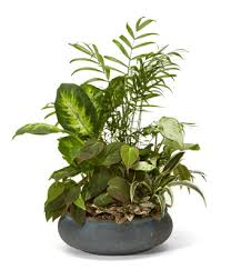 funeral plants premium dish garden at from you flowers