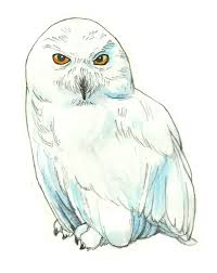 snowy owl clipart harry potter pencil and in color snowy owl