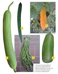 asian vegetables rapidly emerging in florida vsc news